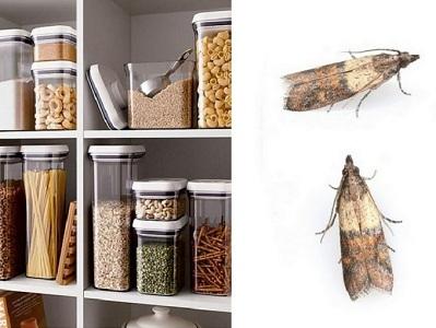 Как уничтожить пищевую моль на кухне